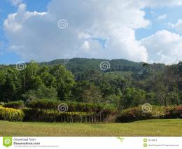 Rural landscape of northern Thailand on the background a mountain 1334