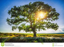 Stock Photo: Big green tree in a field, HDR 415