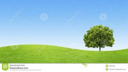 Green Field With A Big Tree On Blue Sky Background Stock PhotoImage 1725