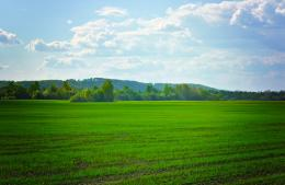 Green Fields Free Stock Photo HDPublic Domain Pictures 1345