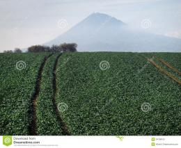 Large Green Field Royalty Free Stock PhotoImage: 34788105 848