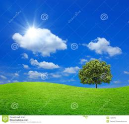 Green Field With Big Tree And Blue Sky Stock PhotographyImage 271