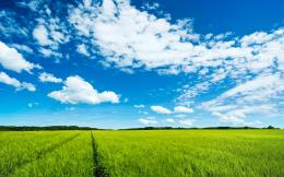 Download Large green field High quality wallpaper 774