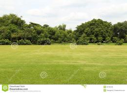 Green Grass Field Stock PhotoImage: 32700340 278