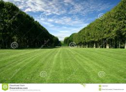 Manicured LawnLarge Green Field Stock ImageImage: 13607551 1514