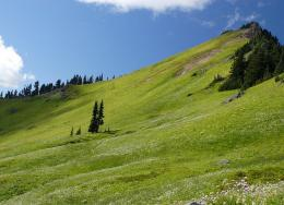 PanoramioPhoto of Large field of green along Tatoosh Trail 336