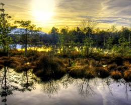 Similar wallpapers for Beautiful swamp in the glory morning 1140