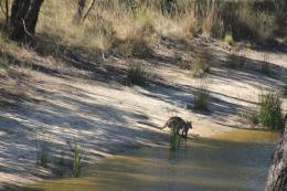 Too hot for swamp wallabies, and for me too! « Fifteen Acres 323