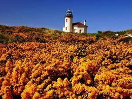 Yellow wildflowers and lighthouse wallpaper 1114