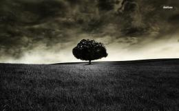 Dark lonely tree wallpaperPhotography wallpapers#10250 1342