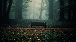 Download Lonely Bench in Forest Wallpaper | Free Wallpapers 1144
