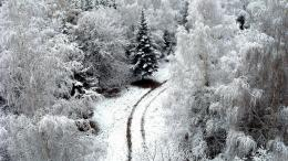 Lonely Road Amazing Beautiful Forest Landscape Nature Winter 1689