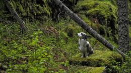 Download Lonely Dog In The Forest wallpaper in Animals wallpapers with 1005