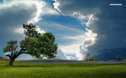 File Name : lonely tree under the cloudy sky 5970 1280x800 jpg 508