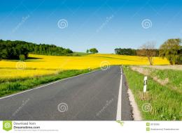 Rapeseed Fields Alongside A Road Royalty Free Stock PhotoImage 1324