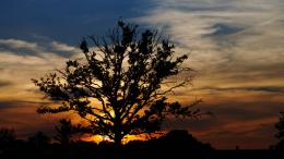 Lonely tree at sunset by Gimper43 368