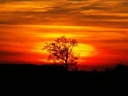 lonely tree at sunset by thomato80 on DeviantArt 1826