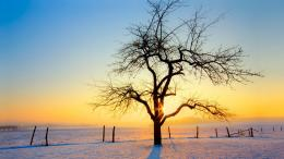sunset behind a lone tree in winter wallpaperForWallpaper com 1916