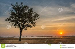 Lonely Tree in Sunset Moment, Ubonratana Dam, Khonkean, Thailand 1220