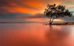 Download Lonely tree in peaceful sunset High quality wallpaper 1678