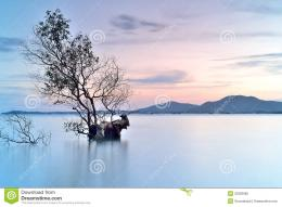 Alone Tree Royalty Free Stock PhotoImage: 32363685 1586