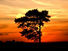 Lonely Tree at Sunset by MilesPortent on DeviantArt 929
