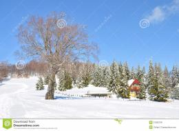 Snow landscape with house among green pine trees, and no leafs tree on 674