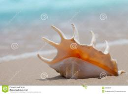 Seashell Macro On The Sand Of Beach Royalty Free Stock ImagesImage 1957