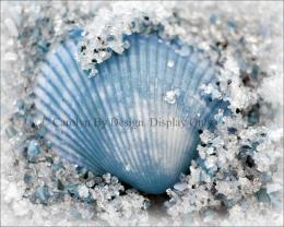 Items similar to Blue Clam Shell Caressed By Beach Sand Macro on Etsy 262