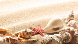 wallpapers beach sand, seashells, summer, sun, macro, photomacro 1373