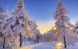 Download Winter Dawn wallpaper in Nature wallpapers with all 1360