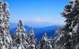 Snowy firs on the top of mountain wallpaper 1610