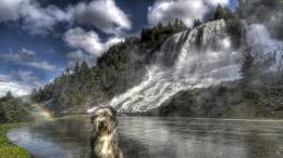 dog beside wonderful waterfall hdr cliff HD Wallpaper 1317