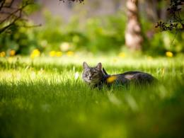 Cat exploring the green meadow HD wallpaper 1920x1200 1920x1080 273