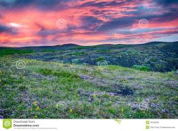 HDR image of a beautiful vivid sunset over the meadow full of blooming 812