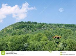 Pavilion In Forest Stock PhotoImage: 43982919 150