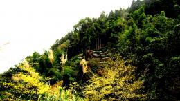 Mountain scenery nature forest:High Contrast 1587