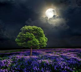 Moonlight Sky Full Purple Field Tree Night hd wallpaper #1709633 1944