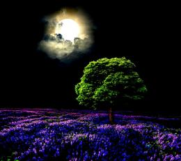 Moonlight Sky Full Purple Field Tree Night hd wallpaper #1709633 1700