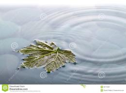 Leaf On Water Over Stones With Ripples Royalty Free Stock Photography 1335