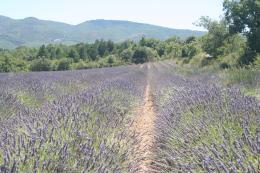 lavender field sharp wide openQuoteko com 319