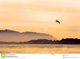 Peaceful bay in orange sunset light with mist and birds watercolor 111