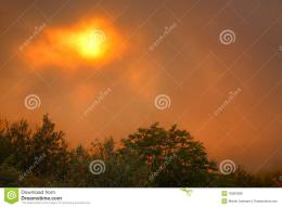 behind a group of trees in a veil of fog and turns the sky orange 848