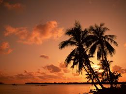 Sunset Ocean Palm Trees Palm tree sunset wallpaper 1602