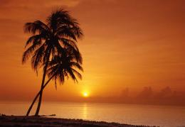 sunset palm tree pics 392