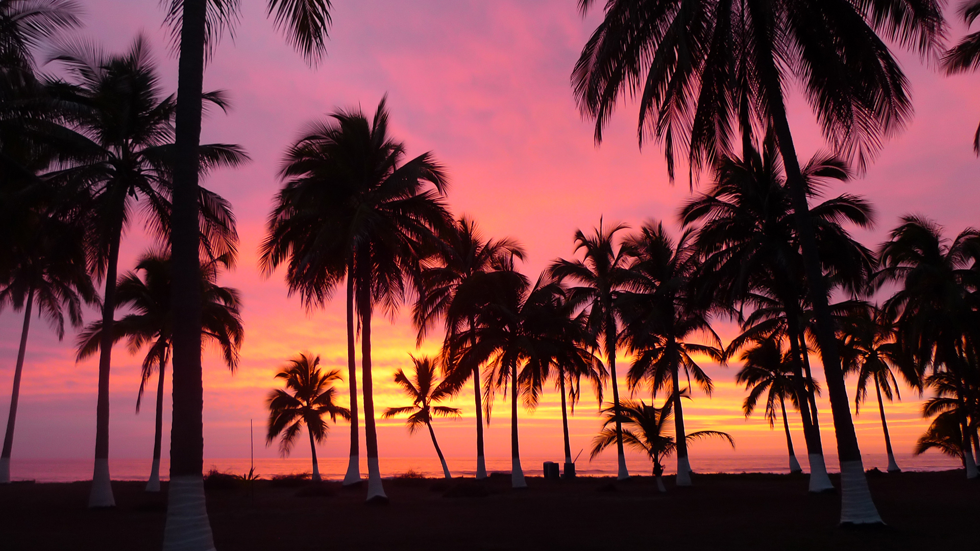 11 Palm Tree Sunset Iphone Wallpaper Purple palm trees ...