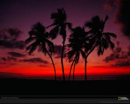 motivational posters sunset palm trees sunset pictures poster for sale 1370