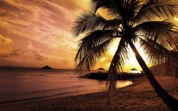 Palm Trees Sunset Wallpaper Palm Trees Sunset hd 563