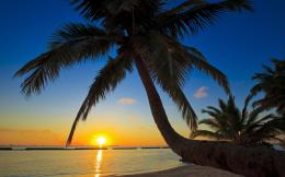 Sunset sea palm trees beaches wallpaper | 2560x1600 | 74863 1997