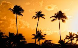 palm trees sunset pictures palm trees sunset pictures palm trees 1023